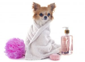 pampered-chi